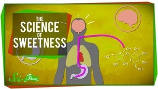 The Science of Sweetness