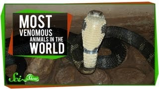 The Most Venomous Animals in the World