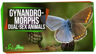 Gynandromorphs: Dual-Sex Animals