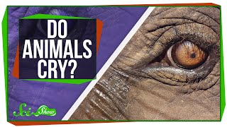 Do Animals Cry?