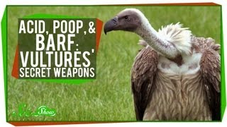 Acid, Poop, and Barf: Vultures' Secret Weapons