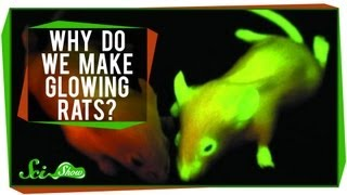 Why Do We Make Glowing Rats?