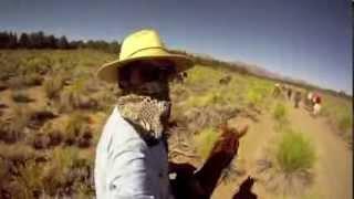 CALIFORNIA COWBOYS: MULE DRIVE!!