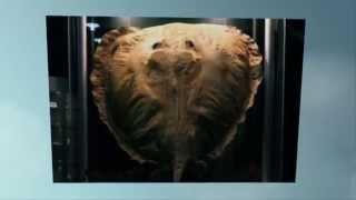 Top 10 Terrifying Prehistoric Sea Monsters — TopTenzNet