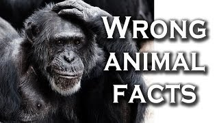 Top 10 Widely Believed Animal Facts That Are Completely Wrong