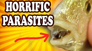 Top 10 Weird and Disturbing Parasites — TopTenzNet