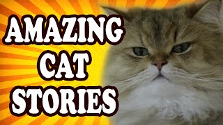 Top 10 Amazing Cat Stories