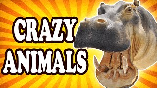 Top 10 Bizarre Traits of Wild Animals (That Actually Make Sense) — TopTenzNet