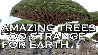 Top 10 Amazing Trees To Strange for Earth