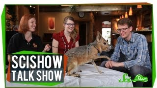 Cute Skulls and Cute Cavies: SciShow Talk Show #17
