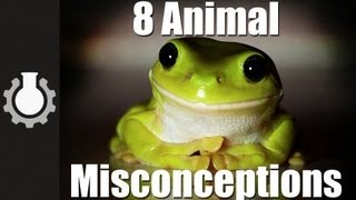 8 Animal Misconceptions Rundown