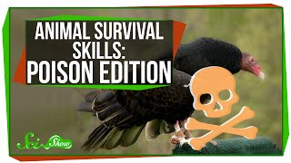 Animal Survival Skills: Poison Edition
