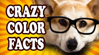 Top 10 Illuminating Facts About Color — TopTenzNet