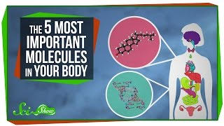 The 5 Most Important Molecules in Your Body