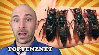 Top 10 Deadliest Bugs — TopTenzNet