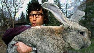 Bunny Wreaks Havoc at Kid's Park