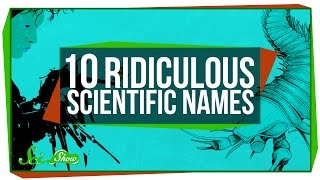 10 Ridiculous Scientific Names