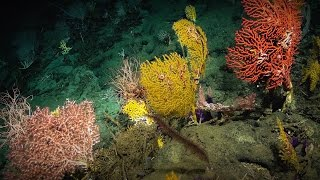 The secrets I find on the mysterious ocean floor | Laura Robinson