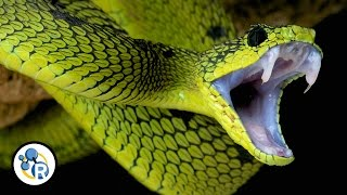 The Chemistry of Snake Venom