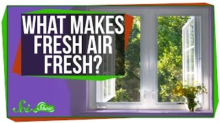 What Makes Fresh Air Fresh?