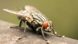 How To Get Rid of a Fly