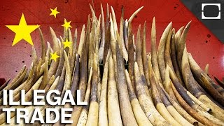 Could China Stop Illegal Wildlife Trafficking?