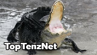 Top 10 Most Dangerous Pets — TopTenzNet