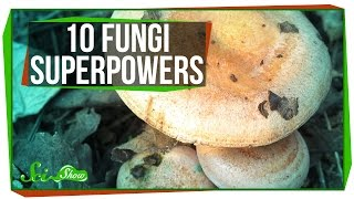 10 Fantastic Fungi Superpowers