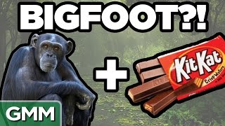 Real Bigfoot Facts (GAME)