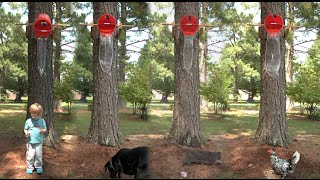 Slow Motion Ice Bucket Challenge (Dog, Cat, Chicken, Kid)  - Smarter Every Day