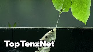 Top 10 Water Animals with AMAZING Superpowers