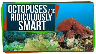 Octopuses Are Ridiculously Smart