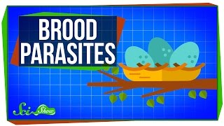 Brood Parasites