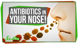 Antibiotics In Your Nose!