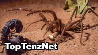 Top 10 Myths About Spiders