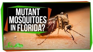 Mutant Mosquitoes in Florida