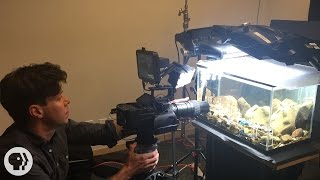 Behind the Scenes with Deep Look: Caddisflies