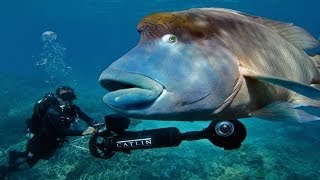 Can you find me? (Streetview on the Great Barrier Reef) - Smarter Every Day 114