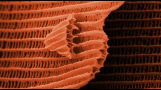 THIS IS A BUTTERFLY! (Scanning Electron Microscope) - Part 2 - Smarter Every Day 105