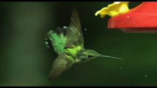 Hummingbird Aerodynamics- High Speed Video - Smarter Every Day 27