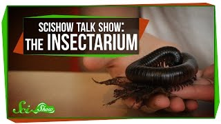 SciShow Talk Show: The Insectarium with Olivia Gordon