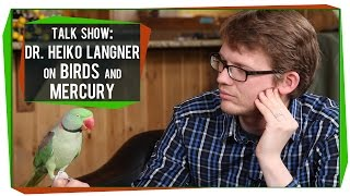 SciShow Talk Show: Dr. Heiko Langner on Birds and Bioaccumulation