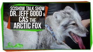 SciShow Talk Show: Dr. Jeff Good & Cas the Arctic Fox