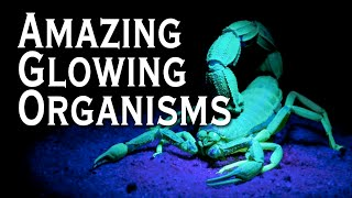 Top 10 Amazing Bioluminescent Organisms - Toptenz.net