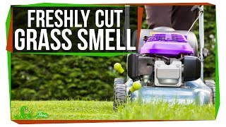 What Makes Fresh Cut Grass Smell?