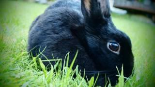 Buckyball Bunny - Periodic Table of Videos