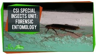CSI Special Insects Unit: Forensic Entomology