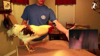 Backdriving a Chicken Powered Steadicam's control algorithm - Pennywhistle Productions
