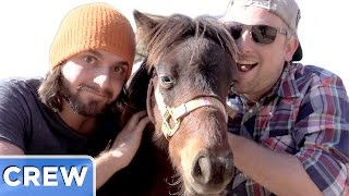 Miniature Horse Farm Adventure | Good Mythical Crew Ep. 39