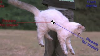 Flipping Cat Maneuver on the Space Station? #askAstro (30 sec) Smarter Every Day 83